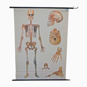 Poster vintage raffigurante uno scheletro di Arrhenius Verlag Bochum
