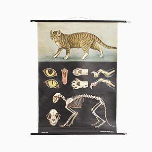 Vintage Katzen-Poster von Jung, Koch & Quentell für Hagemann, 1964