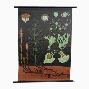 Vintage Lehrtafel von Jung, Koch & Quentell für Hagemann, 1960er
