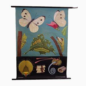 Vintage Schulwandkarte von Jung, Koch & Quentell für Hagemann, 1971