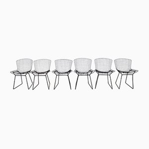 Vintage Chairs by Harry Bertoia for Knoll International, Set of 6
