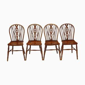 Antike Esszimmerstühle aus Esche & Ulmenholz, 4er Set