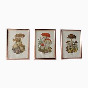 Impresiones botánicas de champiñones vintage, años 30. Juego de 3