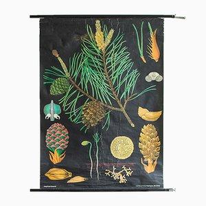 Affiche Scolaire Botanique Mid-Century