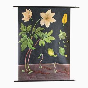 Affiche Scolaire Florale Mid-Century, 1960s