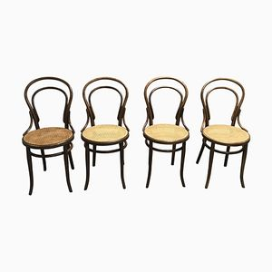 No. 14 Dining Chairs from Thonet, 1950s, Set of 4