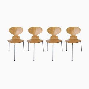 Modell 3100 Ant Chair von Arne Jacobsen für Fritz Hansen, 1995, 4er Set