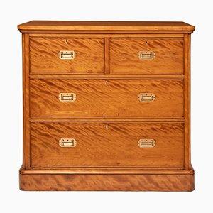 Cassettiera vittoriana in legno di betulla satinato