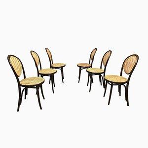 Chaises de Salon de ZPM Radomsko, 1950s, Set de 6