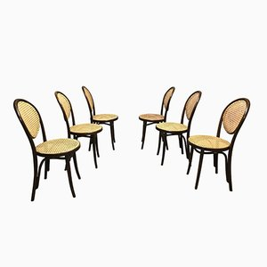 Sedie da pranzo di ZPM Radomsko, anni '50, set di 6