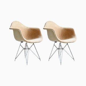 DAR Schalenstühle von Charles & Ray Eames für Zenith Plastic Company, 1950er, 2er Set