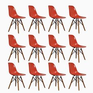 Chaises DSW par Charles & Ray Eames pour Herman Miller, 1970s, Set de 12
