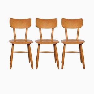 Sillas checoslovacas Mid-Century de TON, años 60. Juego de 3 de sillas
