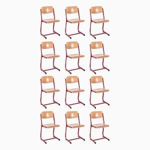 Vintage School Chairs, 1950s, Set of 12