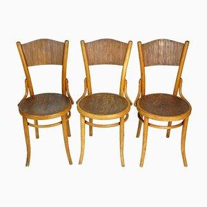 Stühle aus Bugholz von TON, 1950er, 3er Set