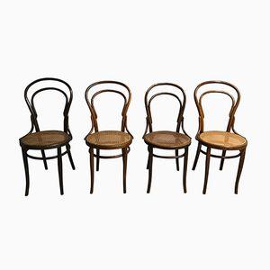 Chaises de Salle à Manger N°14 par Michael Thonet pour Jacob & Josef Kohn, 1950s, Set de 4