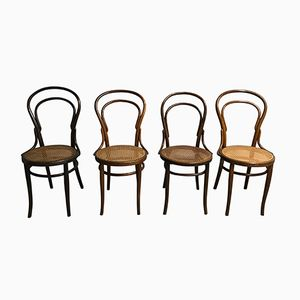 No. 14 Dining Chairs by Michael Thonet for Jacob & Josef Kohn, 1950s, Set of 4