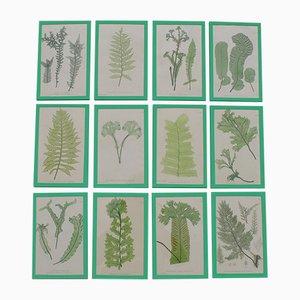 Impresiones de diferentes tipos de hojas de Henry Bradbury, 1855. Juego de 12