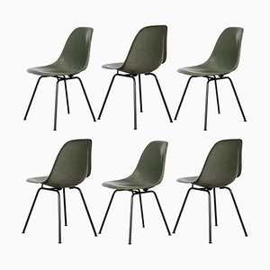 Olive Green DSX Dining Chairs by Charles & Ray Eames for Herman Miller, 1950s, Set of 6
