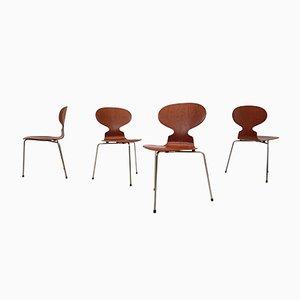 Vintage 3100 Ant Stühle von Arne Jacobsen für Fritz Hansen, 4er Set