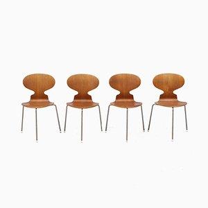 Sillas Myran de Arne Jacobsen para Fritz Hansen, años 50. Juego de 4