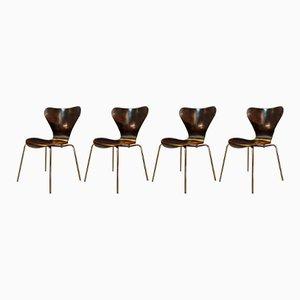 Chaises Série 7 Vintage par Arne Jacobsen, Set de 4