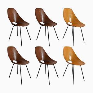 Medea Stühle von Vittorio Nobili für Fratelli Tagliabue, 1956, 6er Set