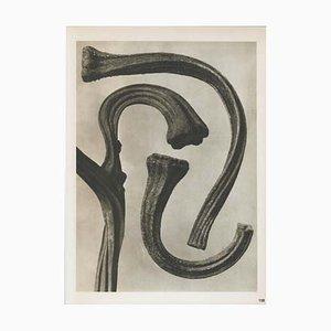 Photogravure Moderne par Karl Blossfeldt, 1942