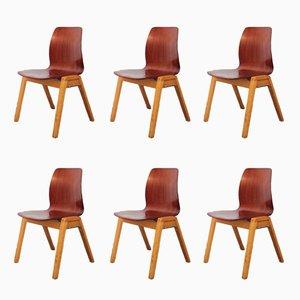 Stapelbare Esszimmerstühle von Adam Stegner für Pagholz Flötotto, 1950er, 6er Set