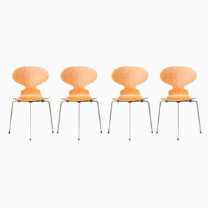 Model 3100 Ant Dining Chairs by Arne Jacobsen for Fritz Hansen, 1950s, Set of 4