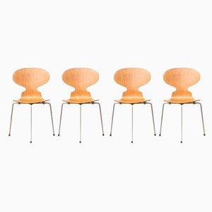 Modell 3100 Ant Esszimmerstühle von Arne Jacobsen für Fritz Hansen, 1950er, 4er Set