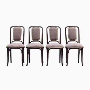 Antike Jugendstil Esszimmerstühle aus Bugholz von Gebrüder Thonet Vienna GmbH, 4er Set