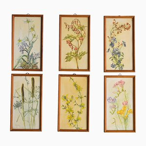 Mid-Century Framed Botanical Engravings, 1950s, Set of 6