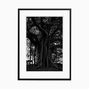 Black Tree Druck von Stuart Möller