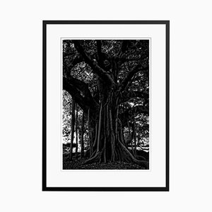 Black Tree Print by Stuart Möller