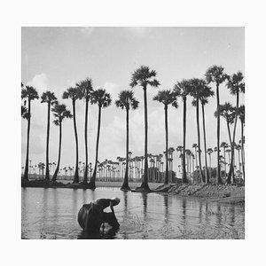 Póster de palmeras de Galerie Prints