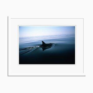 Photographie Dolphin Fin par Tim Graham