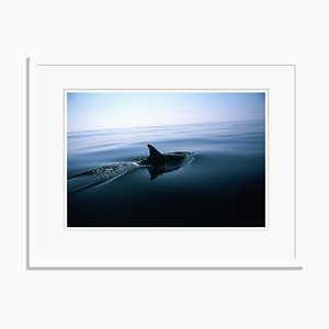 Stampa Dolphin Fin di Tim Graham
