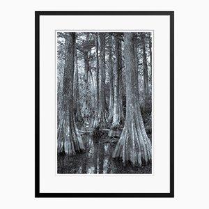 Egret In Trees Druck von Tim Graham
