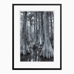 Egret In Trees Print by Tim Graham
