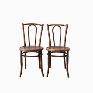 Sedie da bistrò in legno curvato, anni '20, set di 2