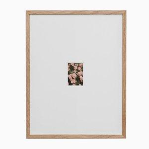 The Rose Garden Nº 21 Print by David Urbano, 2018