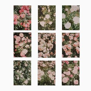 The Rose Garden Prints by David Urbano, 2018, Set of 9
