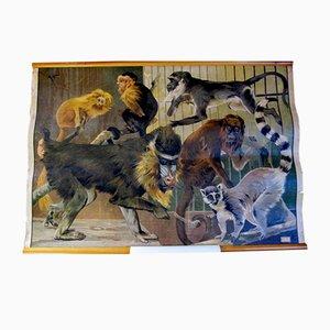 Poster zoologico antico di Karl Jansky, fine XIX secolo