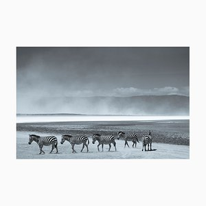 Impression Herd of Zebra par Tim Graham