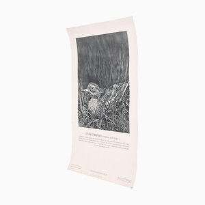 Vintage Eurasian Stone-Curlew Poster