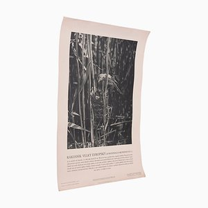 Vintage Great Reed Warbler Poster