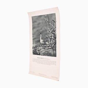 Vintage Flussseeschwalbe Poster