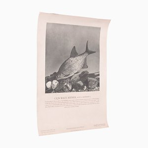 Vintage White Bream Poster