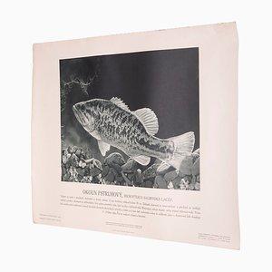 Vintage Forellenbarsch Poster